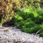 Moss neighbors1