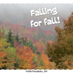 Fall Foliage Photos